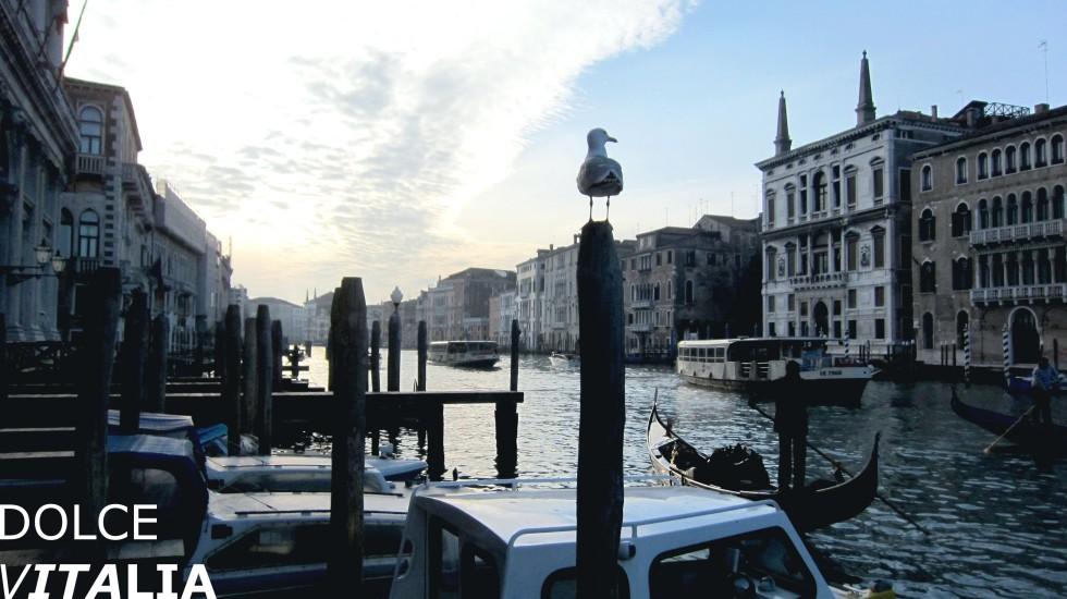 Canal Grande of Venezia with a bird