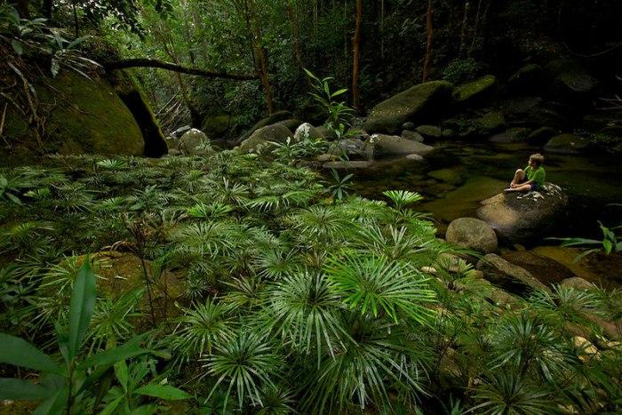 Gunung Palung Kalimantan
