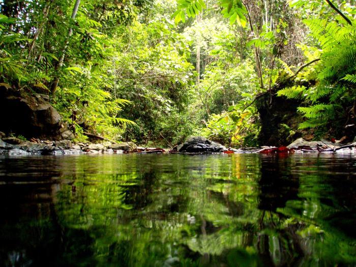 Hutan Kota Untan Kalimantan 2