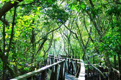 Hutan Kota Untan Kalimantan