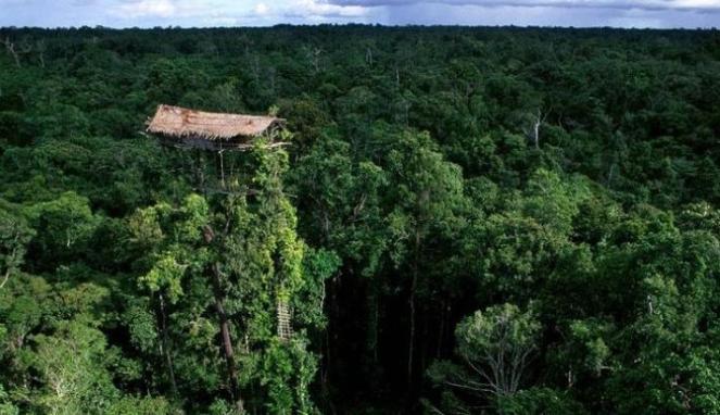 hutan papua 1